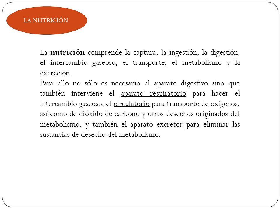 LA NUTRICIÓN. La nutrición comprende la captura, la ingestión, la digestión, el intercambio gaseoso, el transporte, el metabolismo y la excreción.