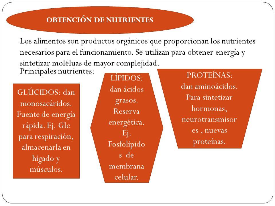 OBTENCIÓN DE NUTRIENTES