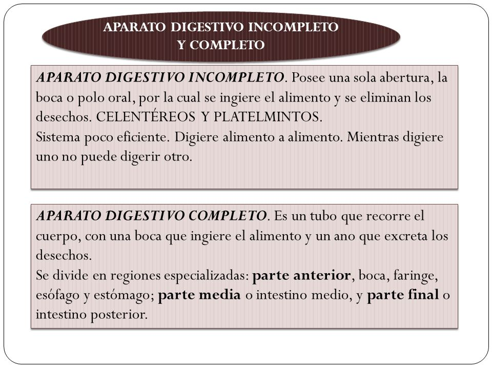 APARATO DIGESTIVO INCOMPLETO Y COMPLETO