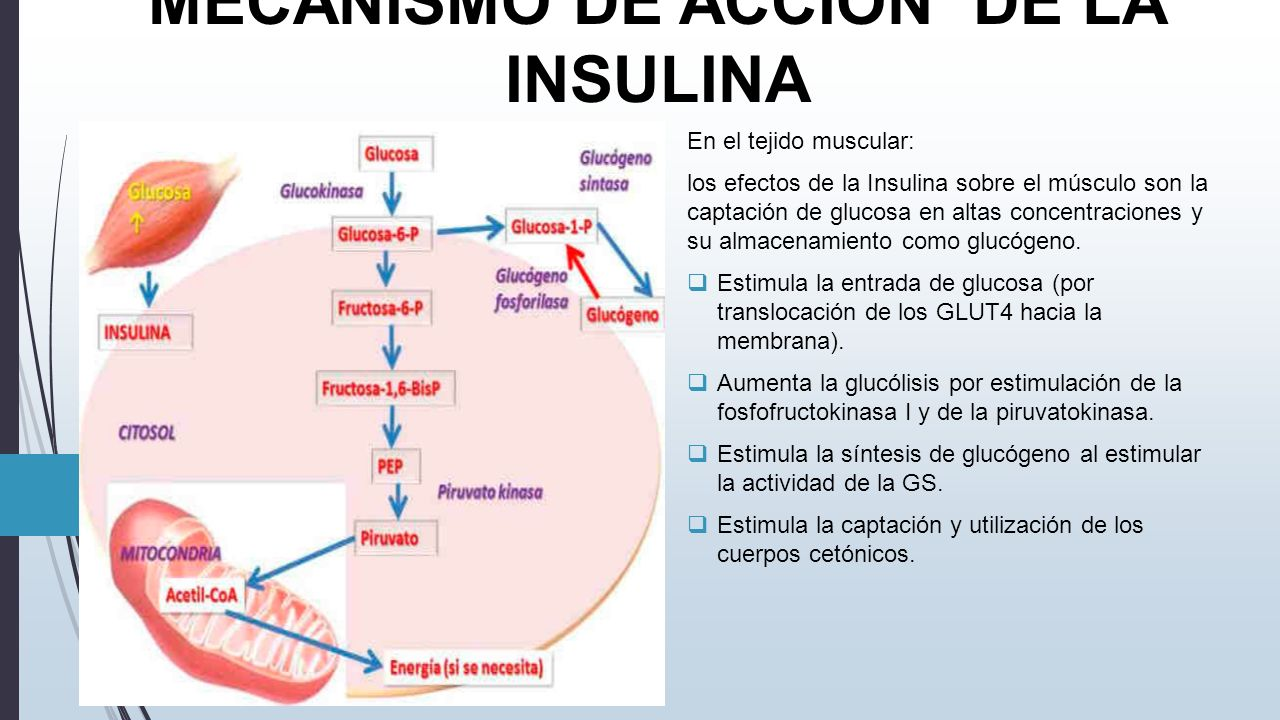 DIABETES MELLITUS BASES BIOQUIMICAS Y PATOLOGICAS - ppt