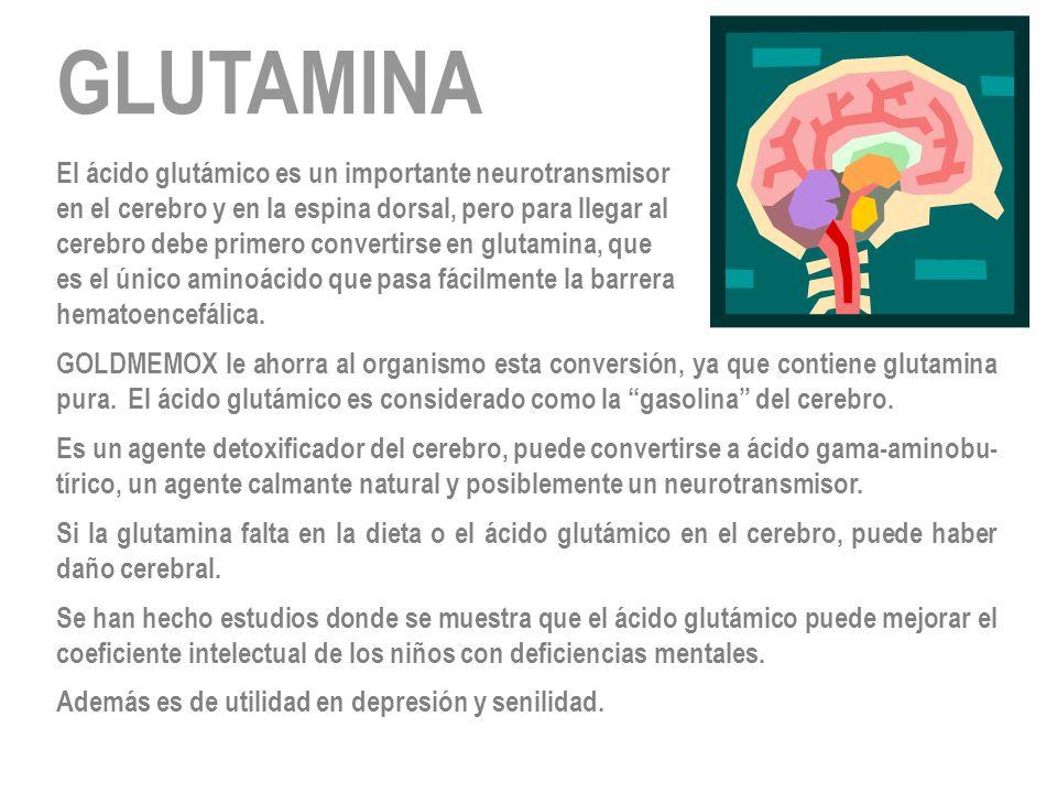 GLUTAMINA El ácido glutámico es un importante neurotransmisor