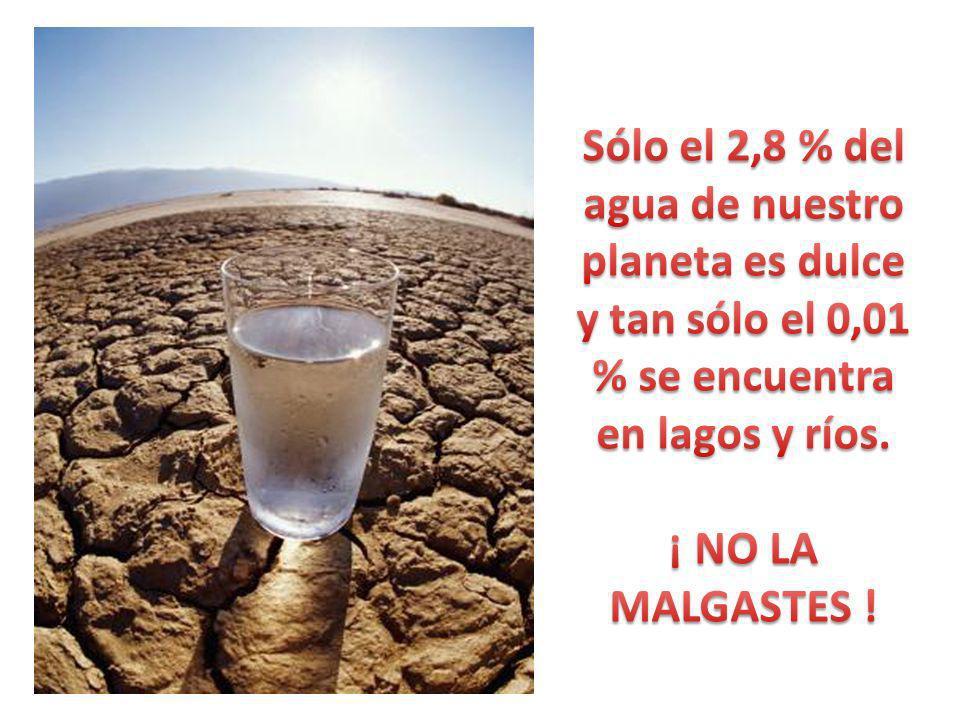 Sólo el 2,8 % del agua de nuestro planeta es dulce y tan sólo el 0,01 % se encuentra en lagos y ríos.