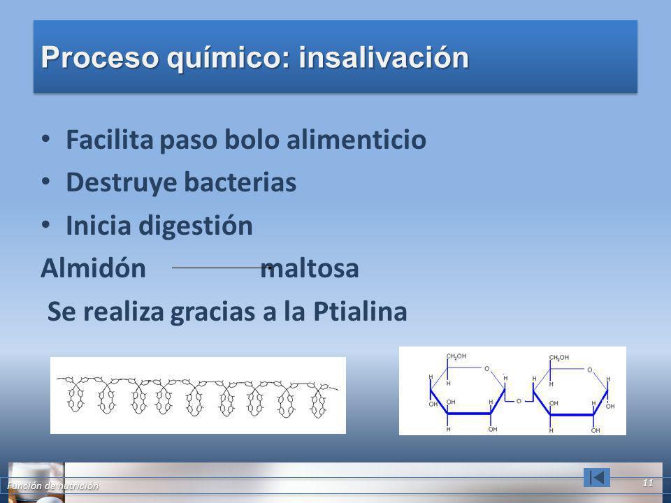 Proceso químico: insalivación