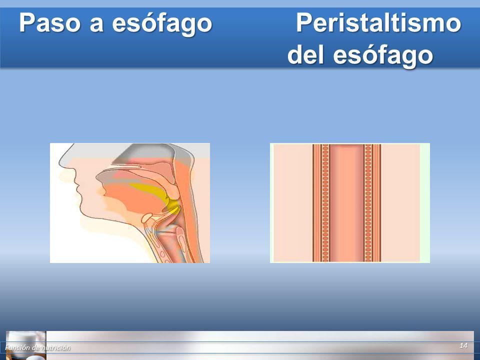 Paso a esófago Peristaltismo del esófago