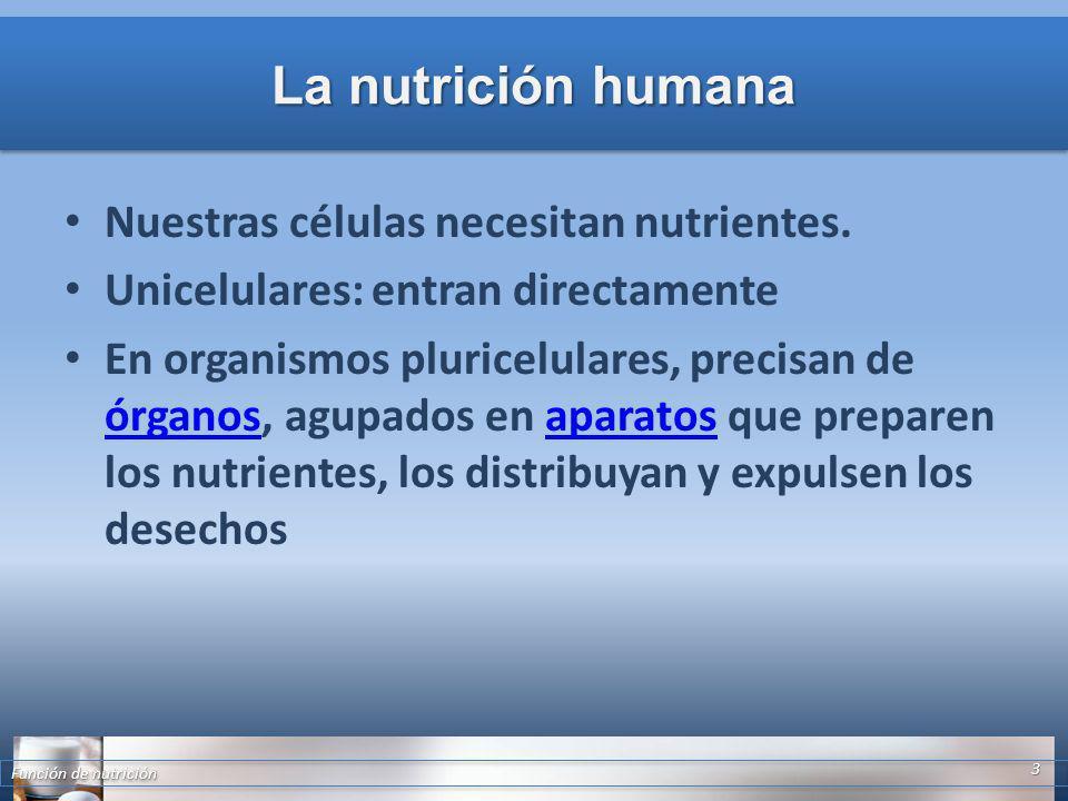 La nutrición humana Nuestras células necesitan nutrientes.