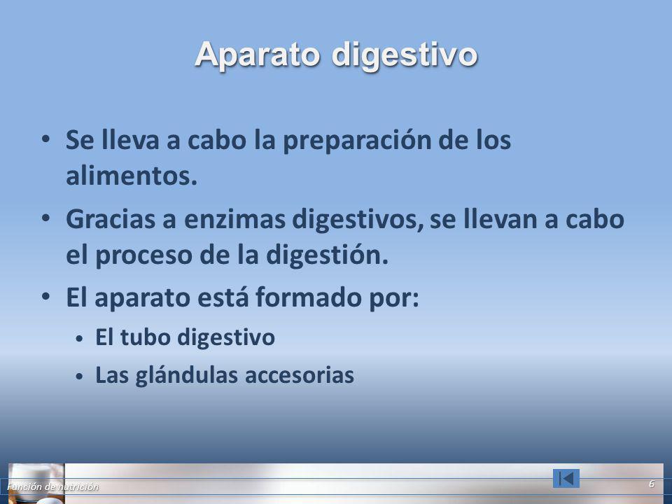 Aparato digestivo Se lleva a cabo la preparación de los alimentos.