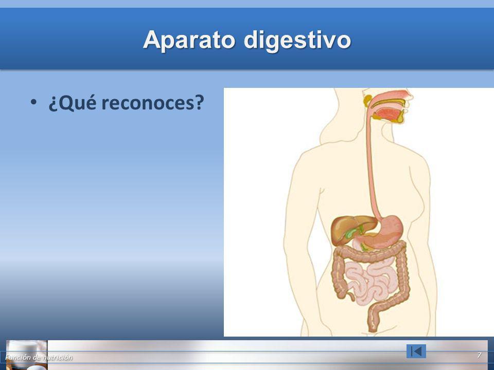 Aparato digestivo ¿Qué reconoces Función de nutrición