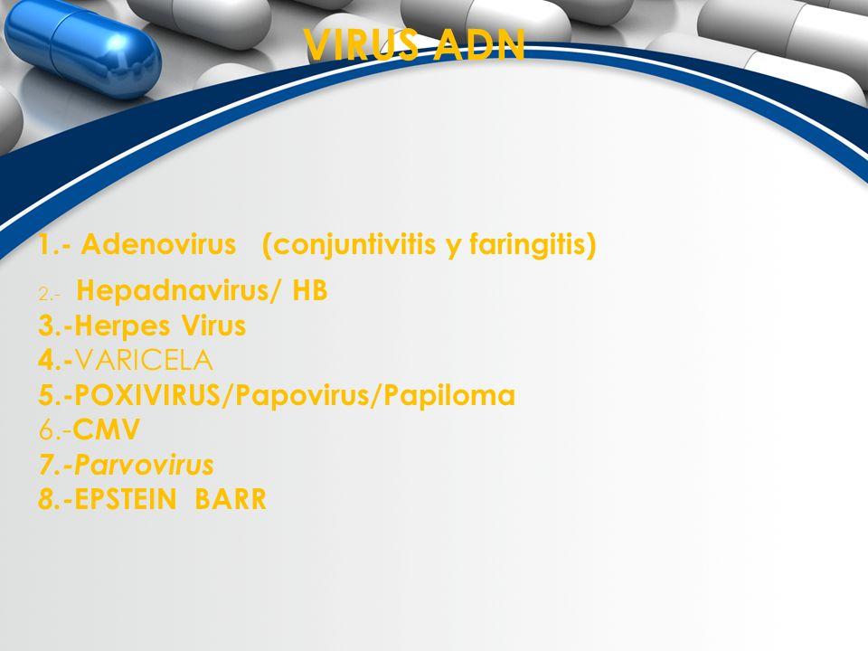 VIRUS ADN 1.- Adenovirus (conjuntivitis y faringitis) 3.-Herpes Virus