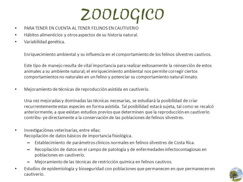 ZOOLOGICO PARA TENER EN CUENTA AL TENER FELINOS EN CAUTIVERIO