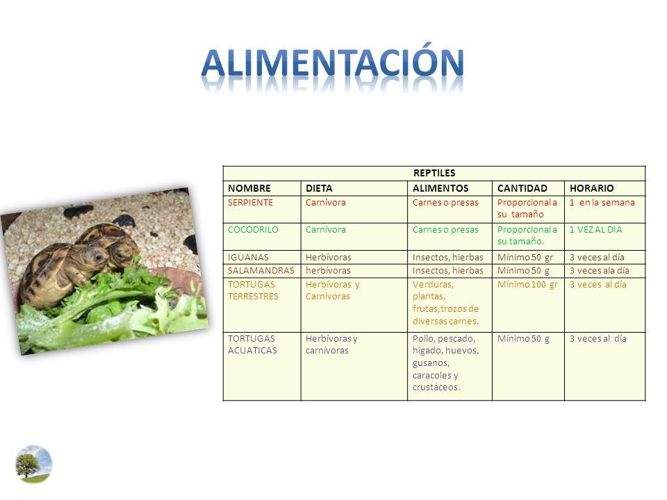 Alimentación REPTILES NOMBRE DIETA ALIMENTOS CANTIDAD HORARIO