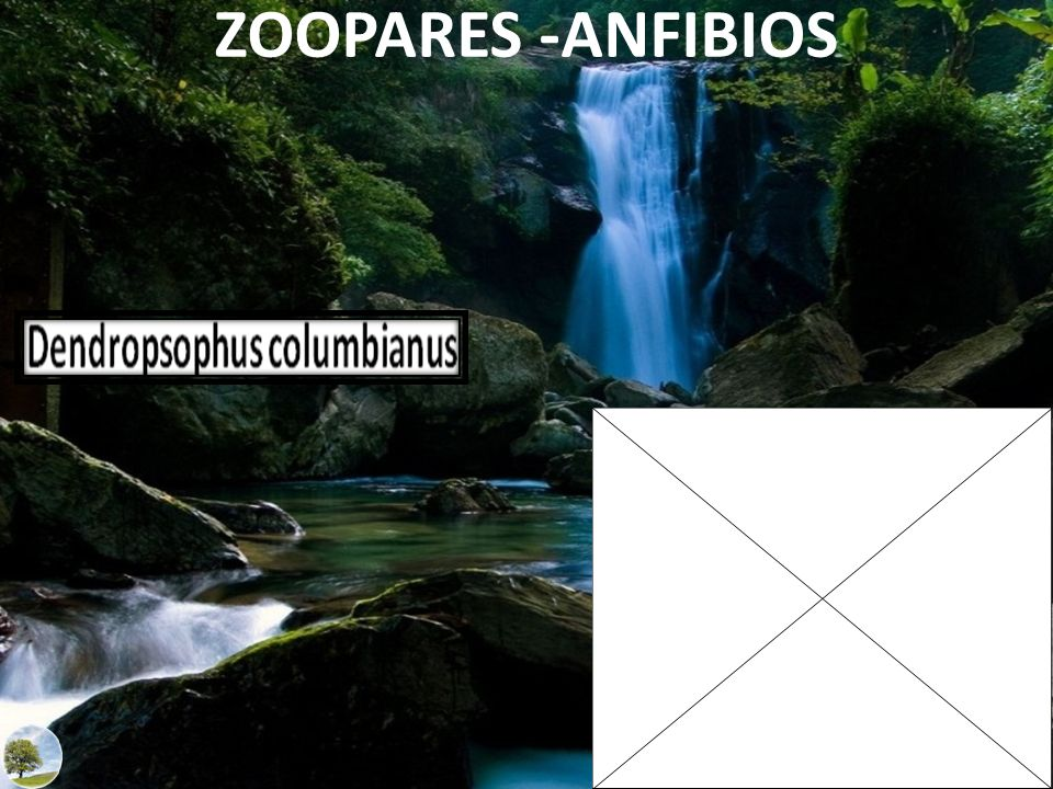 ZOOPARES -ANFIBIOS