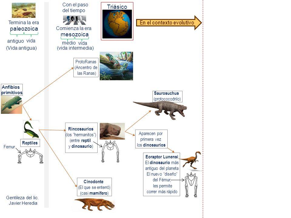 En el contexto evolutivo