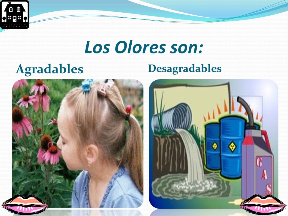 Los Olores son: Agradables Desagradables