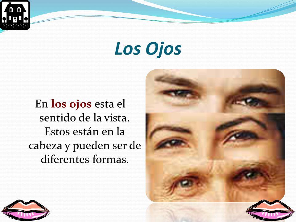 Los Ojos En los ojos esta el sentido de la vista.