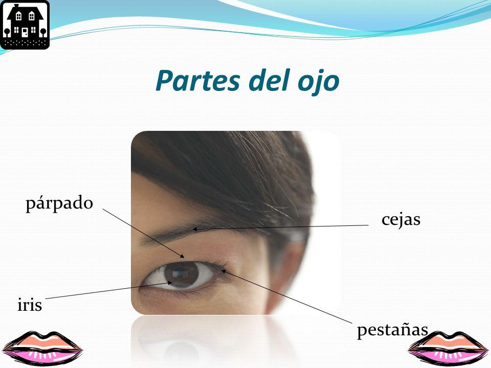 Partes del ojo párpado cejas iris pestañas