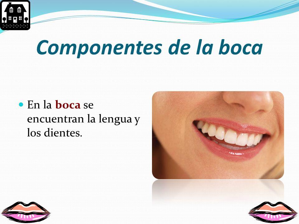 Componentes de la boca En la boca se encuentran la lengua y los dientes.