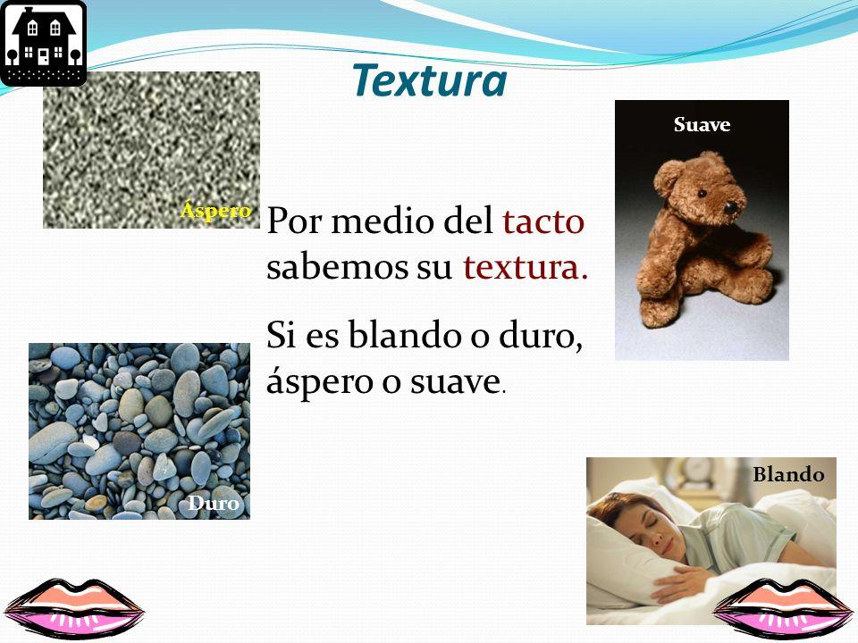 Textura Por medio del tacto sabemos su textura.