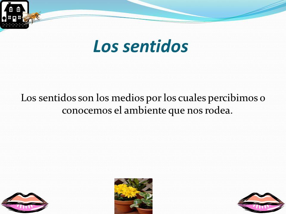 Los sentidos Los sentidos son los medios por los cuales percibimos o conocemos el ambiente que nos rodea.