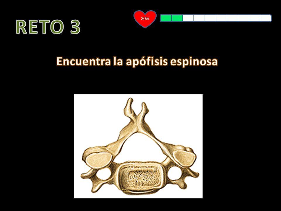Encuentra la apófisis espinosa
