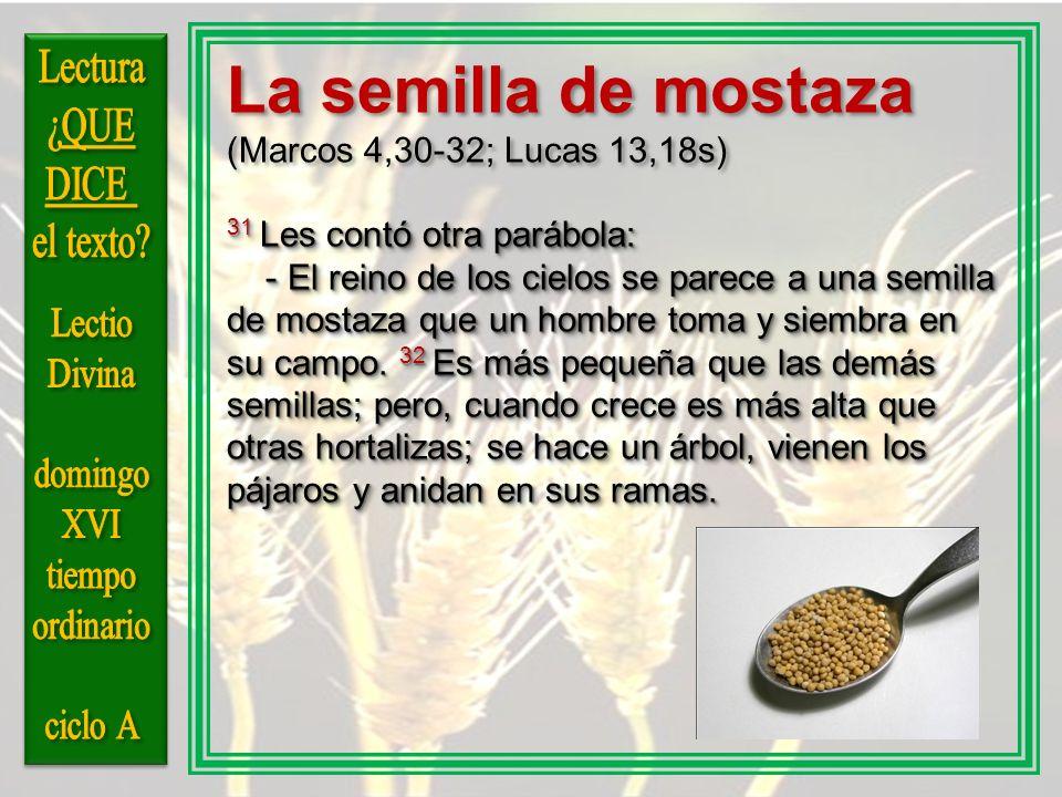 La semilla de mostaza Lectura ¿QUE DICE el texto Lectio Divina