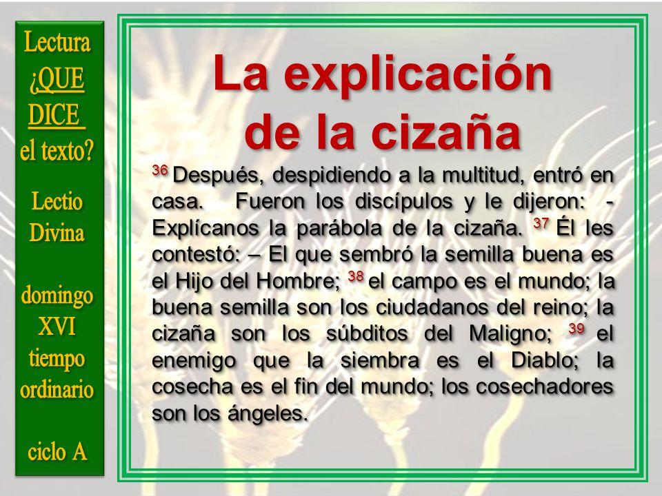 La explicación de la cizaña Lectura ¿QUE DICE el texto Lectio Divina