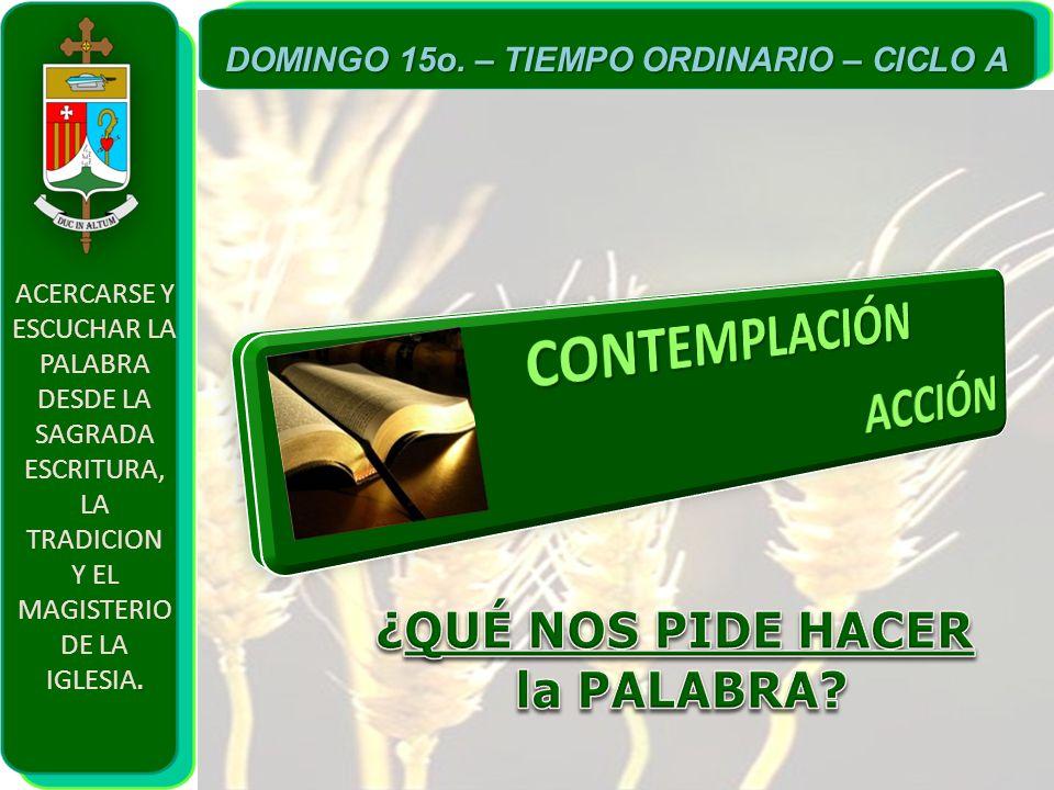 CONTEMPLACIÓN ACCIÓN ¿QUÉ NOS PIDE HACER la PALABRA
