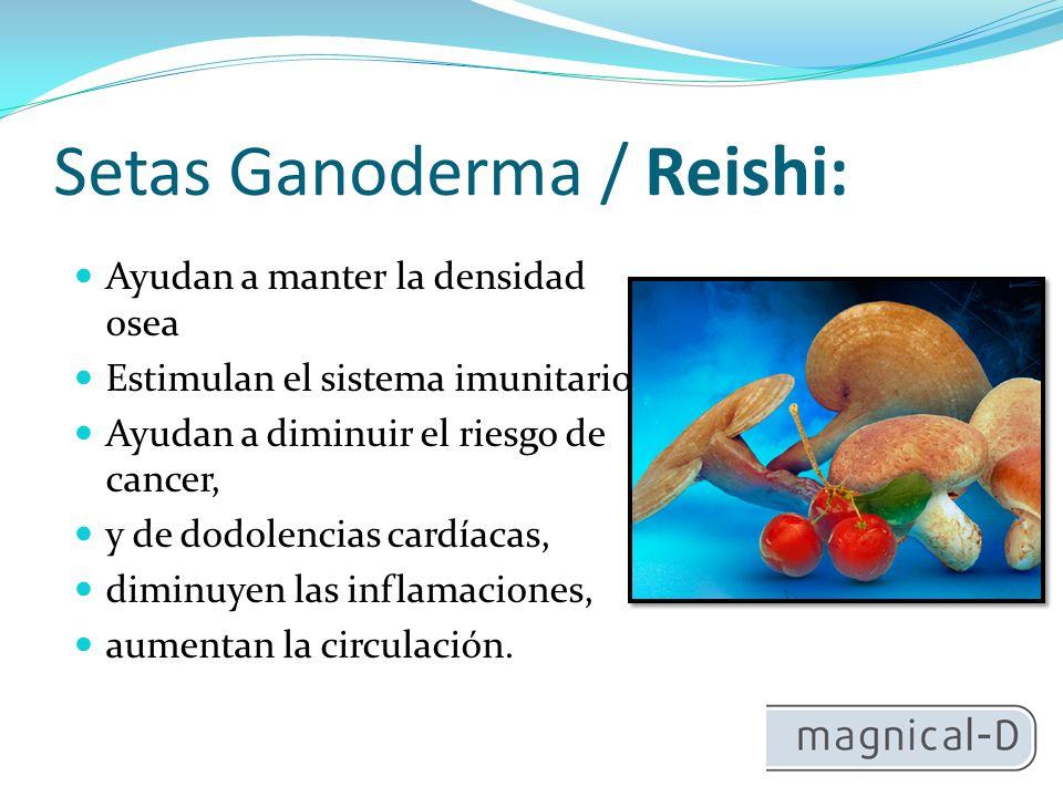 Setas Ganoderma / Reishi:
