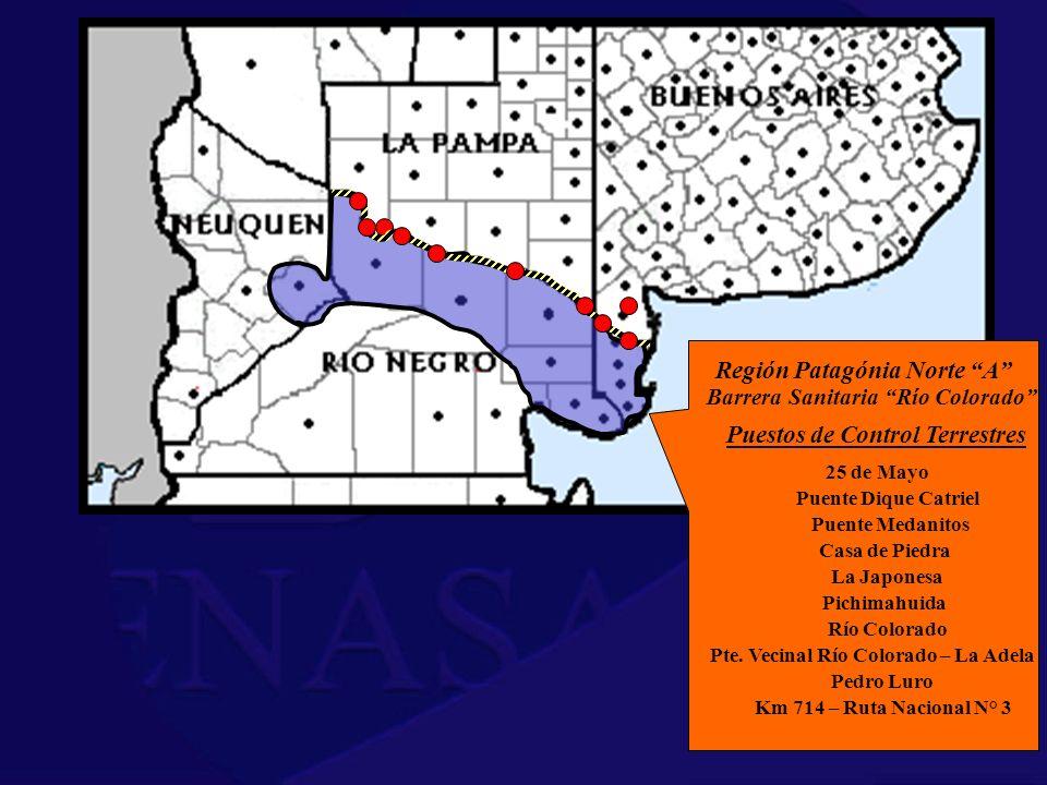 Región Patagónia Norte A