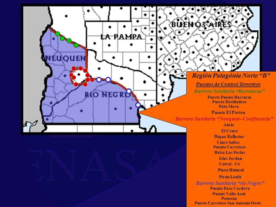 Región Patagónia Norte B