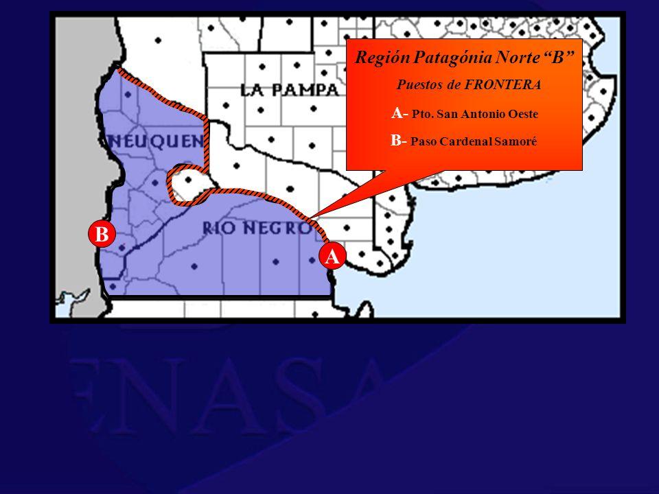 Región Patagónia Norte B B- Paso Cardenal Samoré
