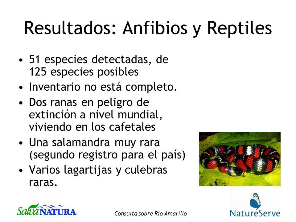 Resultados: Anfibios y Reptiles
