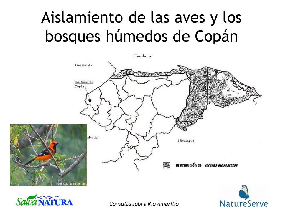 Aislamiento de las aves y los bosques húmedos de Copán