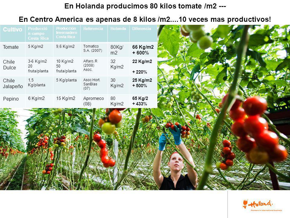 En Holanda producimos 80 kilos tomate /m2 ---