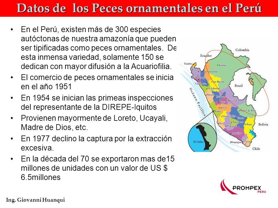 Datos de los Peces ornamentales en el Perú