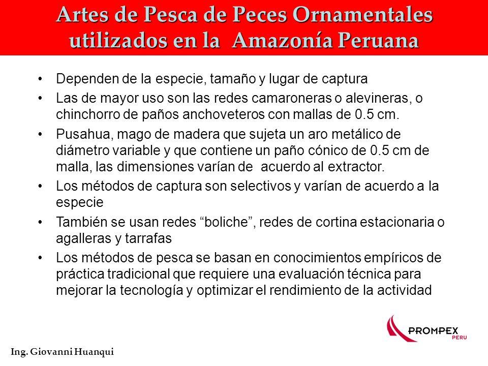 Artes de Pesca de Peces Ornamentales utilizados en la Amazonía Peruana