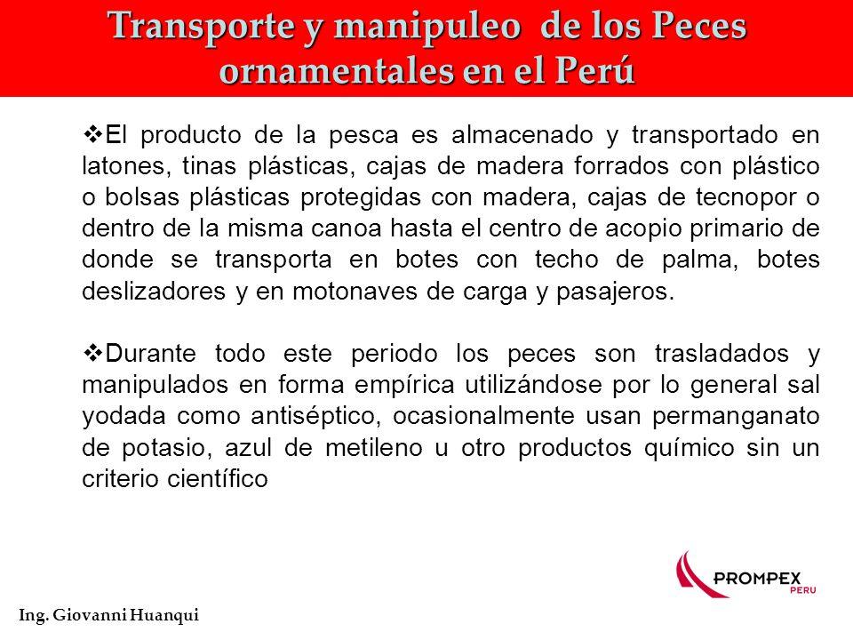 Transporte y manipuleo de los Peces ornamentales en el Perú