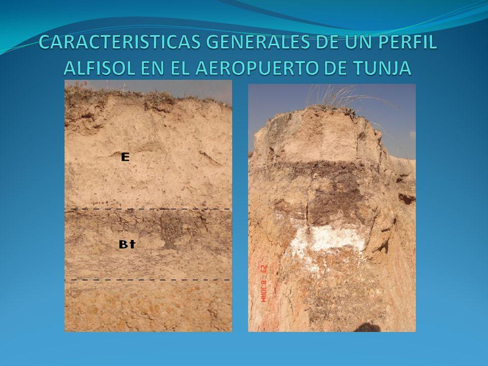 CARACTERISTICAS GENERALES DE UN PERFIL ALFISOL EN EL AEROPUERTO DE TUNJA