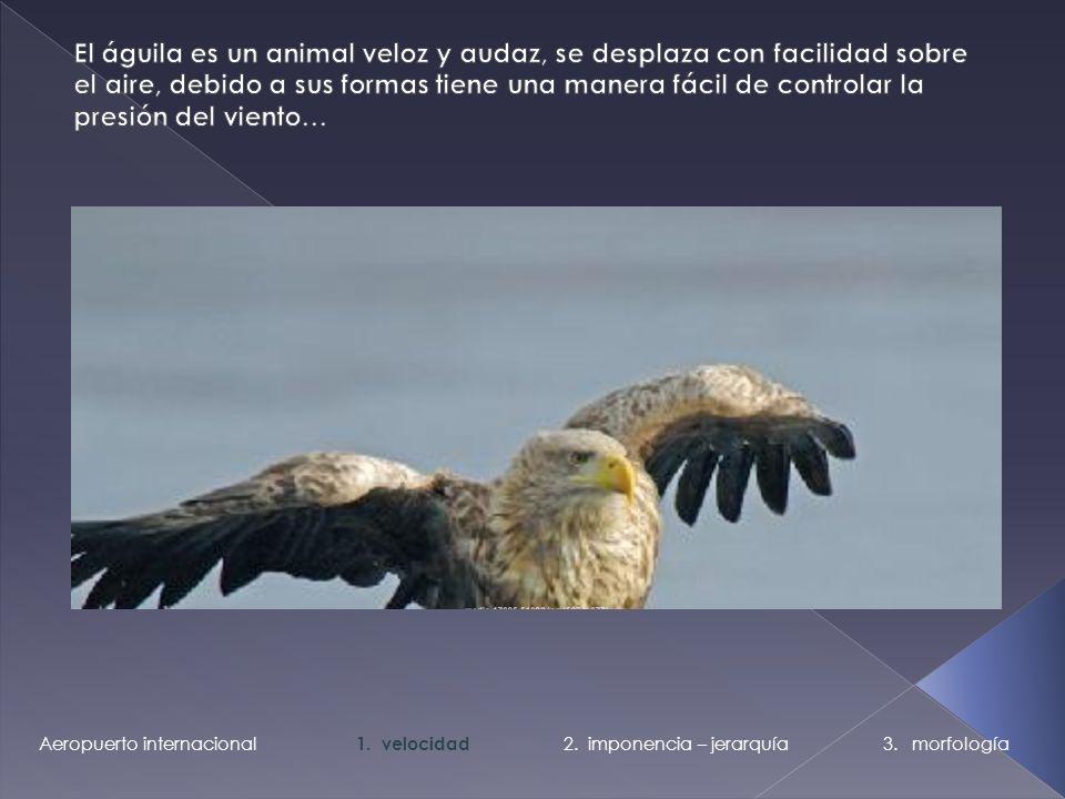 El águila es un animal veloz y audaz, se desplaza con facilidad sobre el aire, debido a sus formas tiene una manera fácil de controlar la presión del viento…