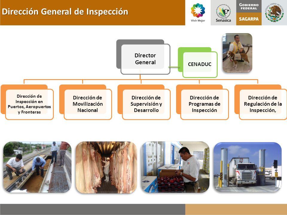 Dirección General de Inspección