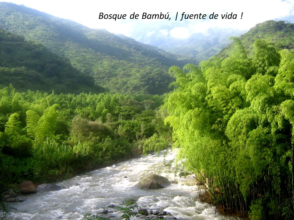 Bosque de Bambú, | fuente de vida !
