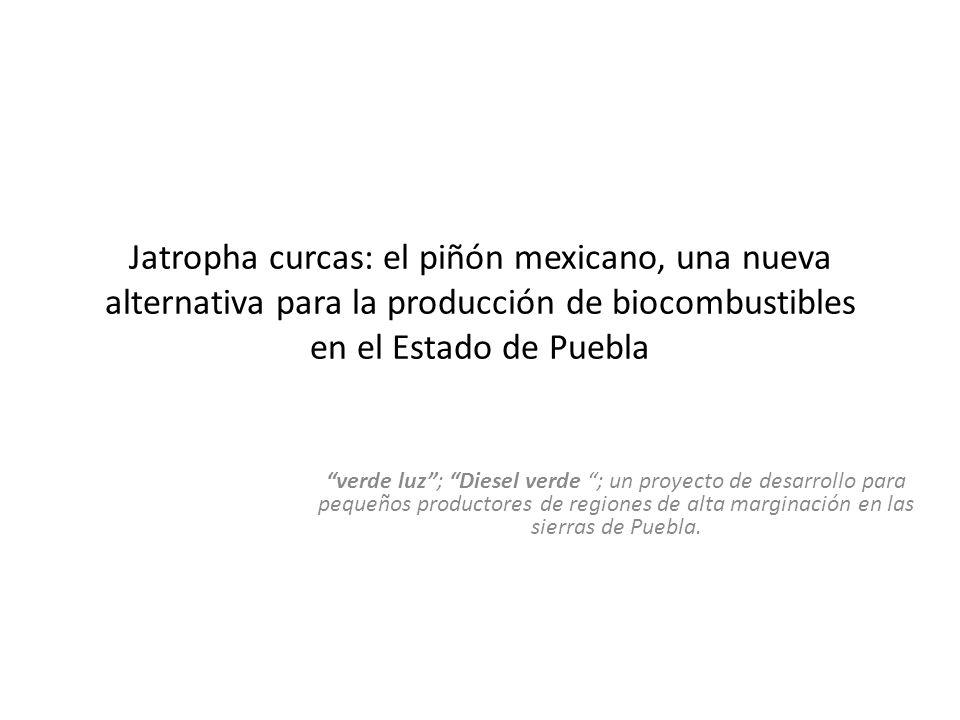Jatropha curcas: el piñón mexicano, una nueva alternativa para la producción de biocombustibles en el Estado de Puebla