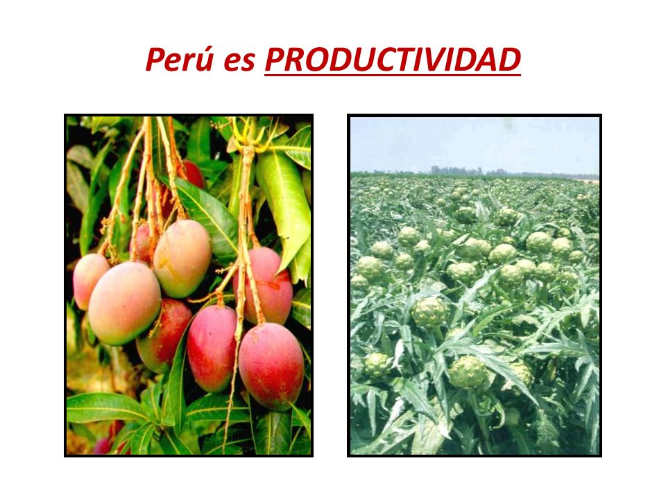 Perú es PRODUCTIVIDAD
