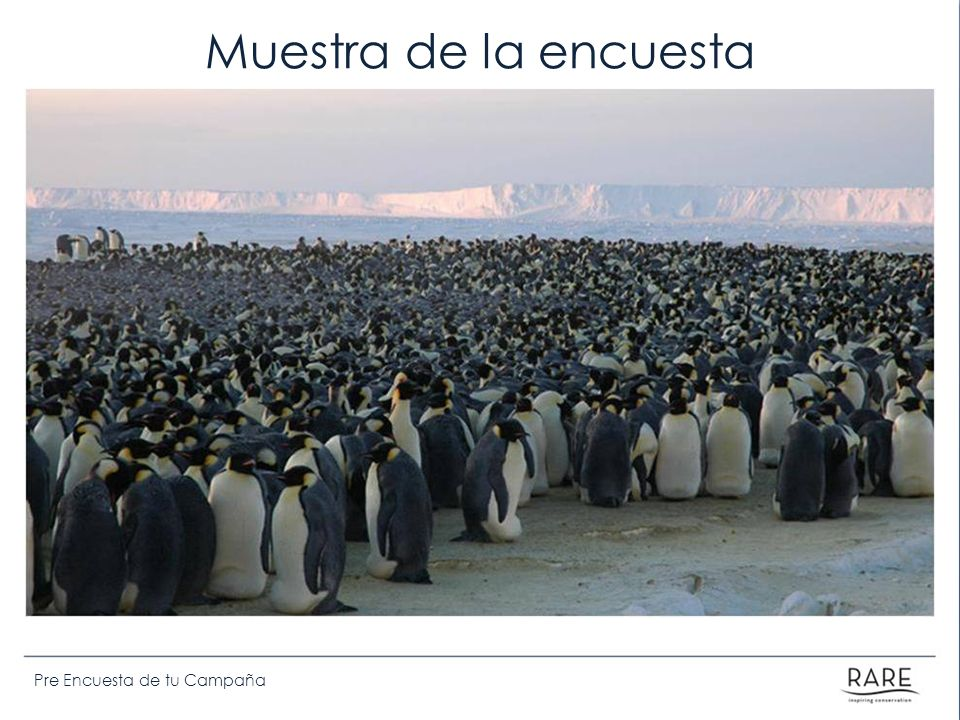 Muestra de la encuesta Emphasis that there are too many people/penguins to be able to count them all… so we need to take a sample.