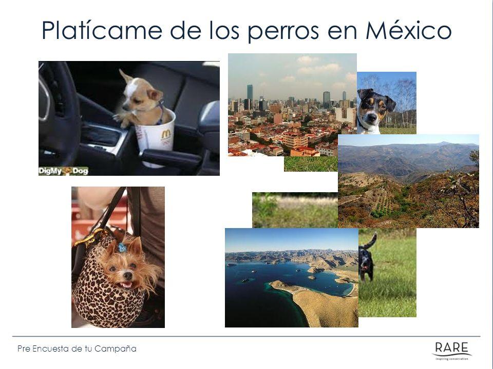 Platícame de los perros en México