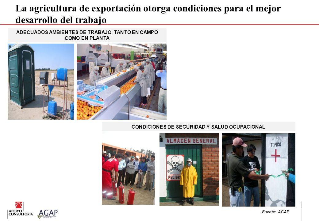 La agricultura de exportación otorga condiciones para el mejor desarrollo del trabajo