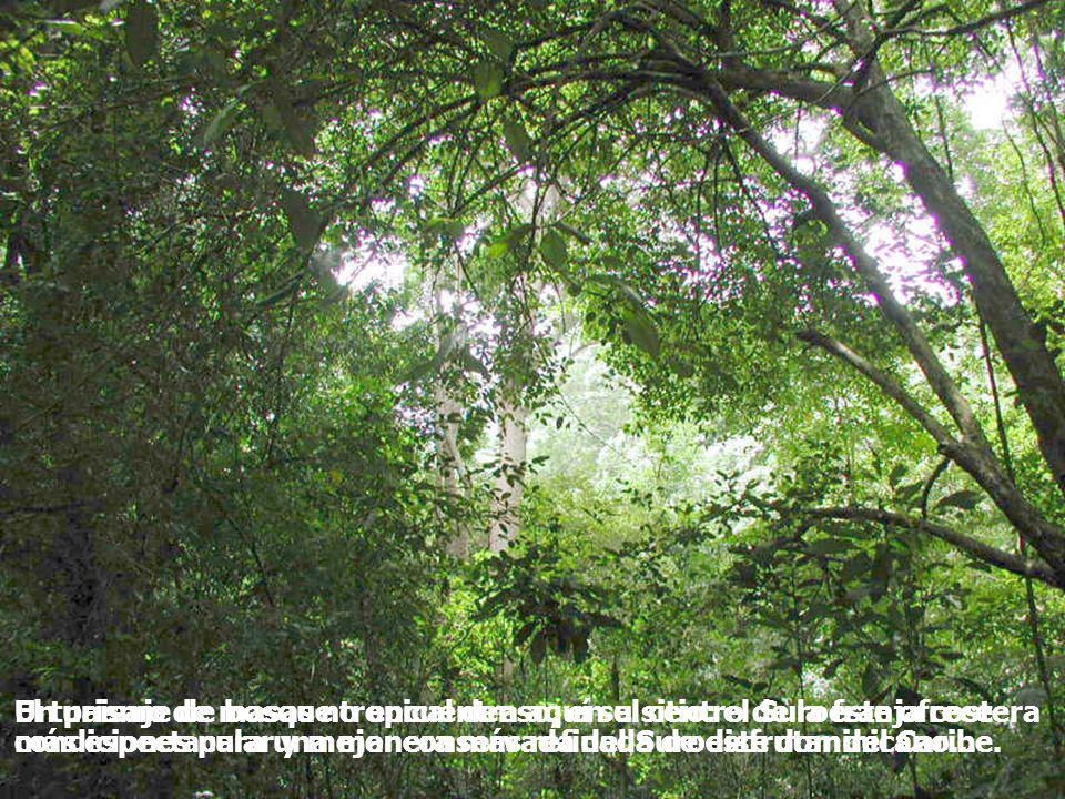 Un paisaje de bosque tropical denso, en el centro de la franja costera más espectacular y mejor conservada del Suroeste dominicano...