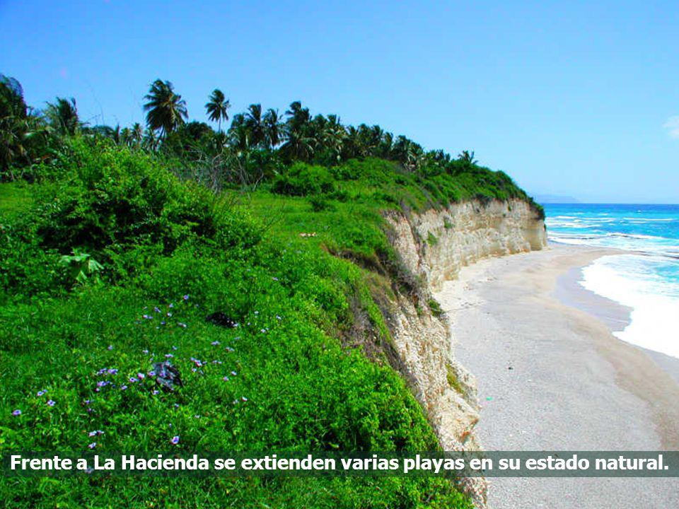 Frente a La Hacienda se extienden varias playas en su estado natural.