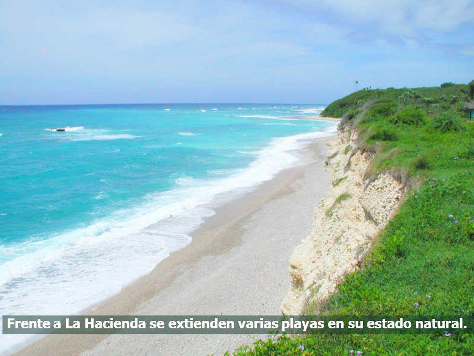Frente a La Hacienda se extienden varias playas en su estado natural.