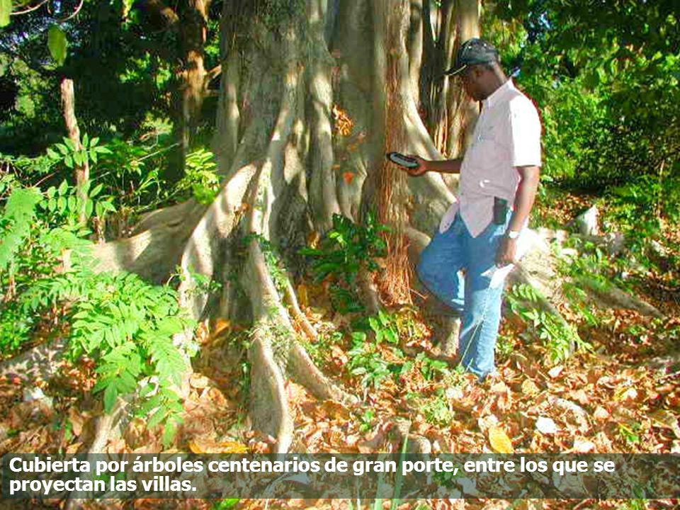 Cubierta por árboles centenarios de gran porte, entre los que se proyectan las villas.