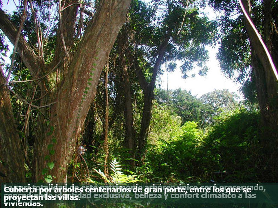 La casi totalidad de este patrimonio arbóreo único será preservado, concediendo identidad exclusiva, belleza y confort climático a las viviendas.